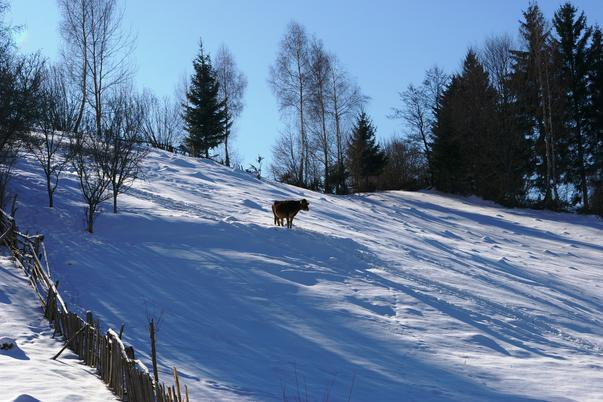 IARNA IN ARGES