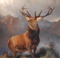 Pictura Monarch of the Glen