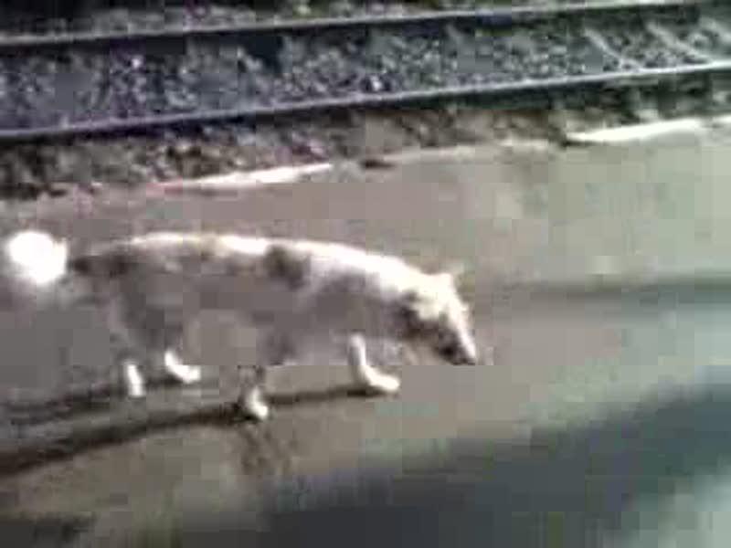 ROSIORI NORD nod de cale ferata si gara europeana