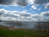 Primavara in Olanda