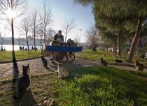 Istanbul, Oferte Stradale - Chiftele si Mititei
