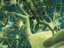 Celulele pielii transformate in neuroni