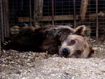 Animalele sunt lasate sa moara de foame
