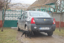 Ferrari din Carpati