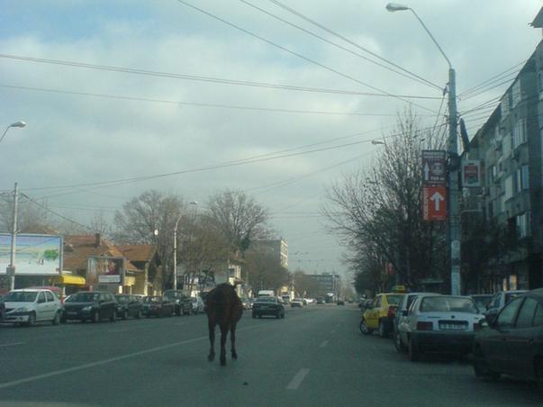 Un cal singur prin Bucuresti