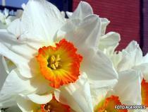 Femeile primesc flori in aceasta zi