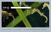 Bing, principalul motor de cautare al Microsoft si Yahoo!