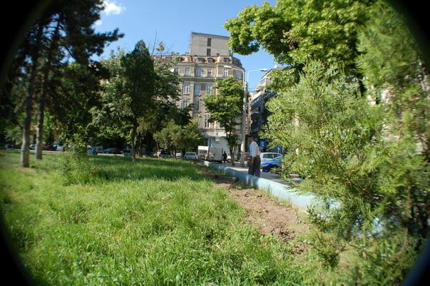 Gardul viu din parcul in care va fi construit Monumentul Holocaustului a fost scos