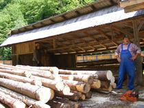 Parlamentul ar putea legifera interzicerea exportului de lemne