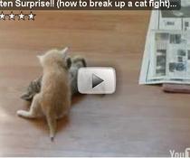 Surprize intre pisici