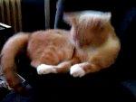 Pisica pe subwoofer