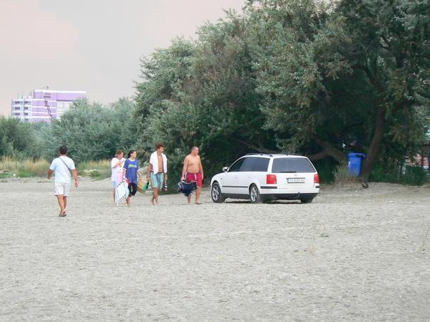 Bizon pe plaja