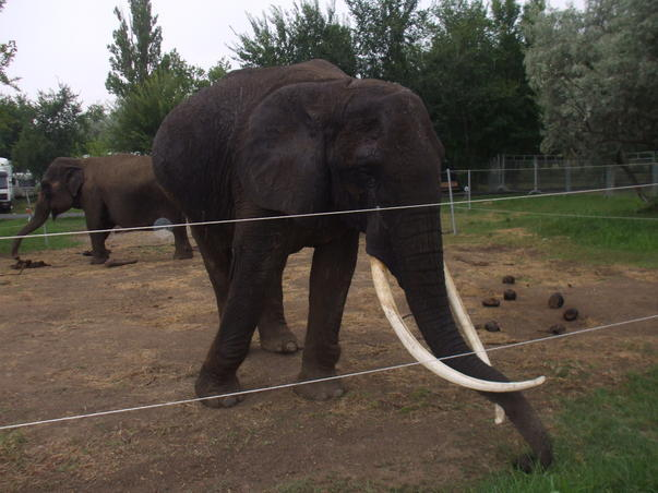 Elefanti in Mamaia