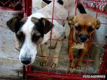 Maidanezi intr-un adapost pentru caini