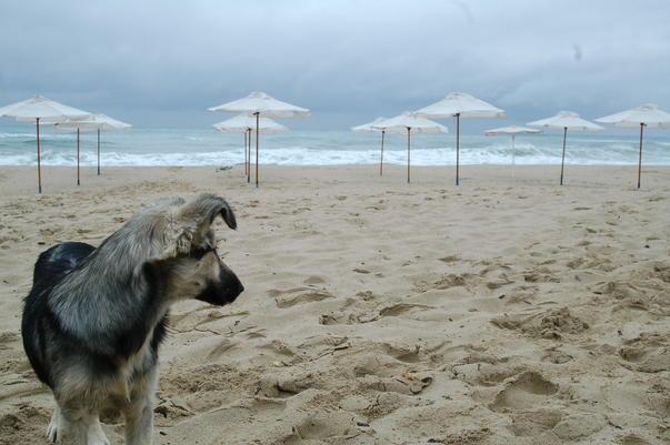 Plaja in Bulgaria