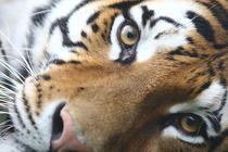 Zoo Bucuresti
