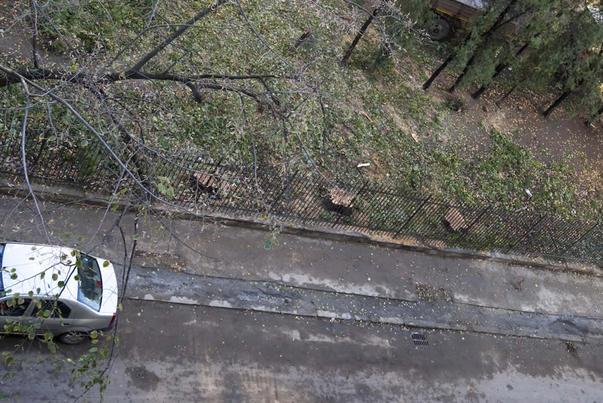 """Bucuresti, un oras verde, """"protejat"""" de ADPU (3)"""