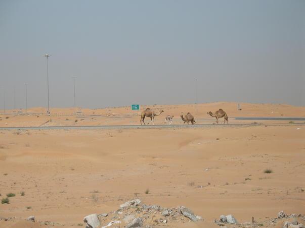 Prin desert (2)
