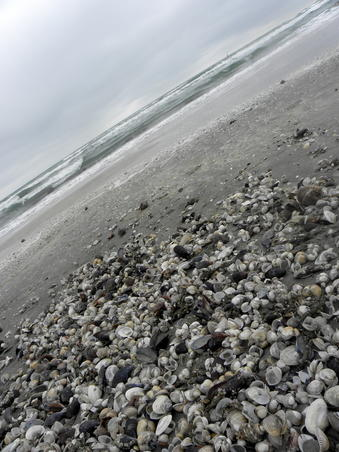 Marea Neagra - noiembrie 2009 (2)
