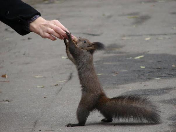 si binenteles, nuci pentru veverite..