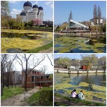 Distrugerea complexului Lac Padurice Arad