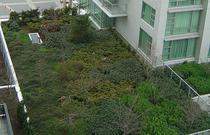 Acoperis verde