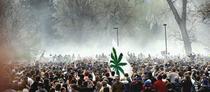 Aproape 15.000 de oameni au fumat marijuana la University of Colorado