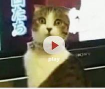 Dramatic cat