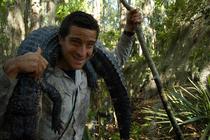 Bear Grylls cu un aligator