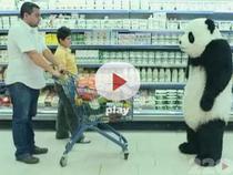 Nu te pune cu Panda
