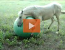 Calul si mingea