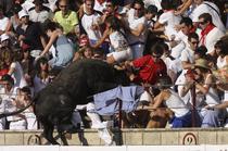 Animalul a ranit spectatorii