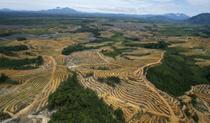 Defrisari in Indonezia