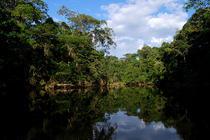 Parcul National Yasuni