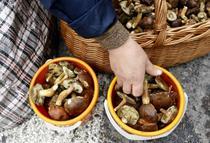 Ciupercile culese din padure te pot otravi
