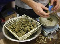 Mai multe state americane aproba legalizarea marijuanei
