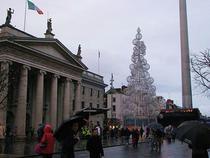 Bradul de Craciun, pregatit in Dublin