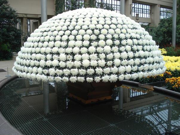 o mie de flori de crizantema pe o singura tulpina