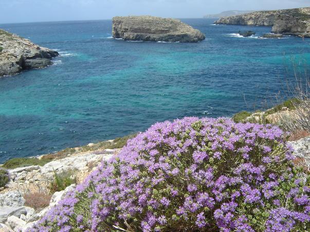 Comino, Malta (3)