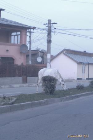 cal pe sosea