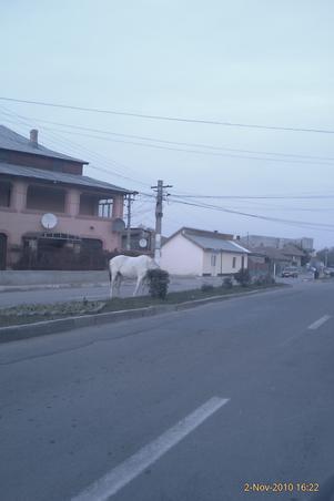 cal pe sosea (2)