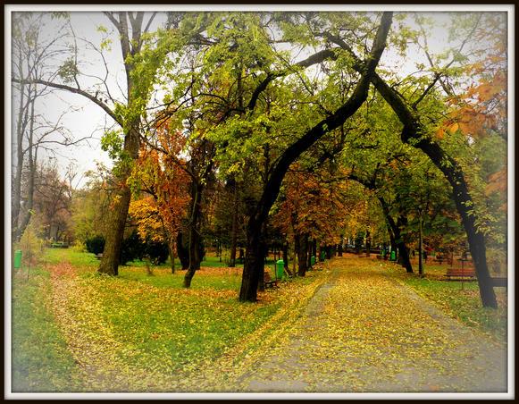 toamna la Cluj1