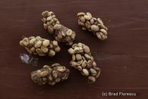 Kopi Luwak, cea mai scumpa cafea din lume