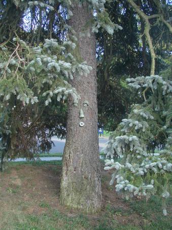 un copac