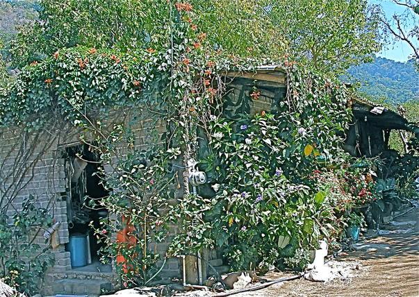 casa in yelapa