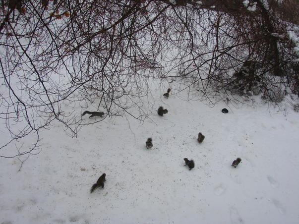peisaj hibernal cu veverite
