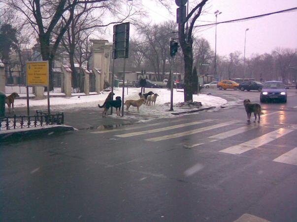Bucuresti, capitala europeana