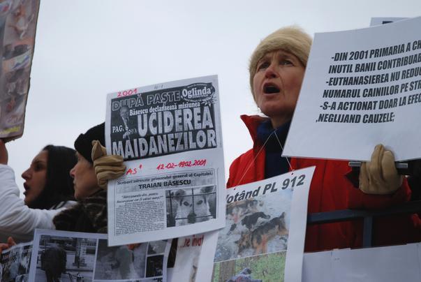 Protest impotriva eutanasierii cateilor (3)