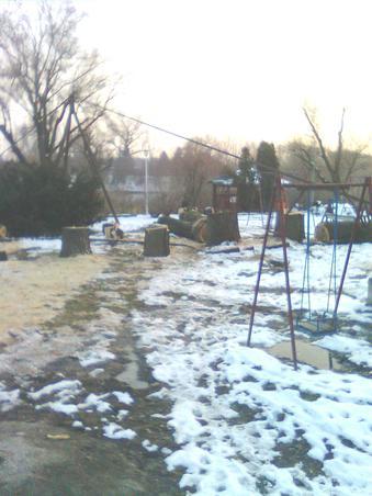 taieri pe malul muresului, arad,executate asupra unor arbori(precum se vede) perfect sanatosi!!! (2)