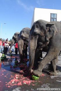 Parada Elefantilor